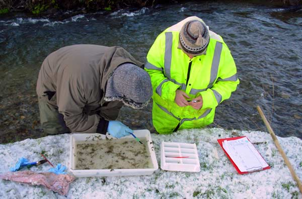 Invertebrate monitoring through the winter- memnbers of the Llanybydder Angling Association collecting the dat for the 2009/10 winter sample.